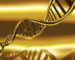 What does golden DNA activation do?