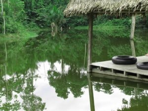 Blue Morpho Tours Ayahuasca Center 2010 Hamilton Souther Malcom Rossiter pool of water